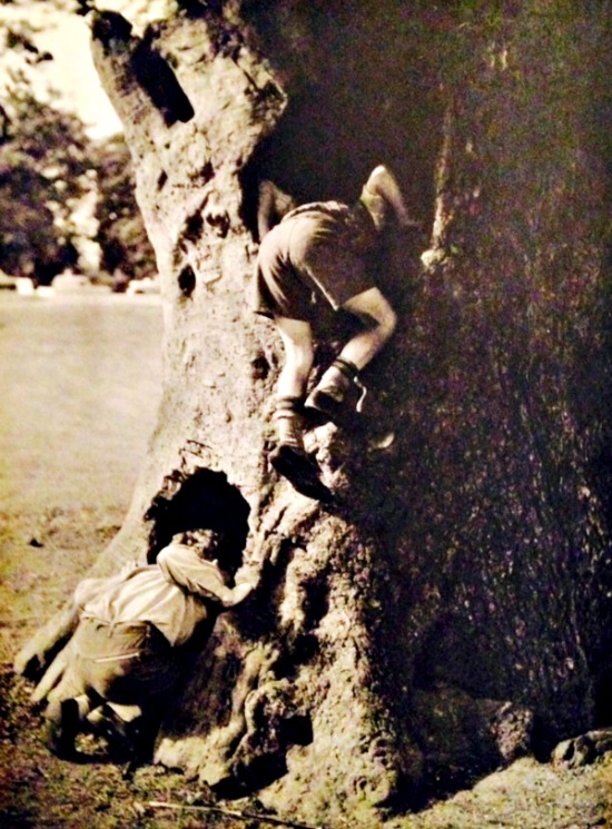 Photograph of two boys playing on a oak tree in Hyde Park, London, 1950s by R. S. Magowan