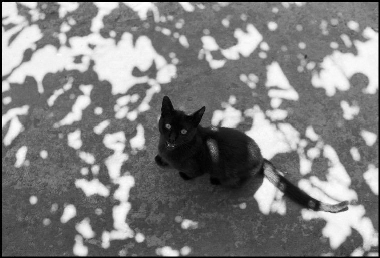 cat and dappled light photograph by Ferdinando Scianna